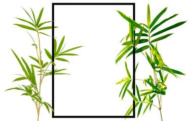 Cadre bambou, fond blanc  © Unclesam
