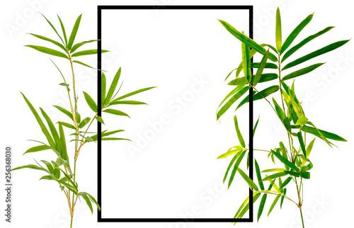 Cadre bambou, fond blanc