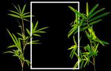 Fototapeta Bedroom - Tiges de bambou, cadre, fond noir © Unclesam