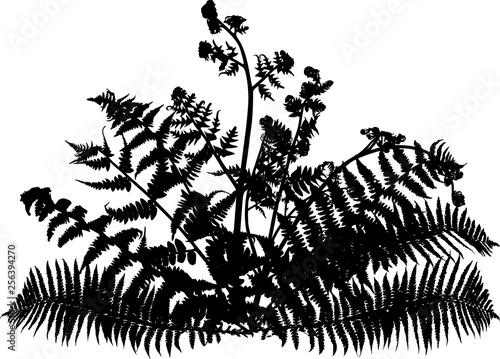 fern bush silhouette on white - 256394270