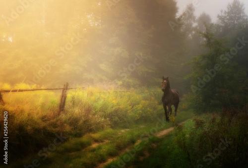 kary koń na ścieżce © daria