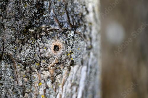 arbre © Pascal Huot