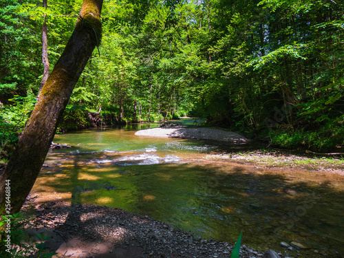 Foto Murales River with forest