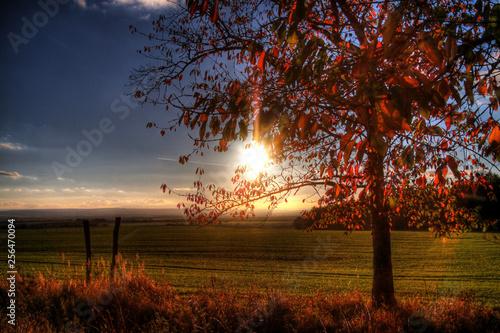canvas print picture Sonnenuntergang im Herbst