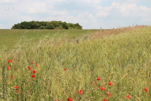 Prairie in Normandy (France) - 256470416