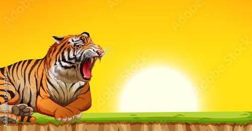 A tiger on sunset scene