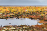 Northern tundra landscape with colorful trees and bushes, moss and small lake on a cloudy autumn day. Kola Peninsula, Murmansk oblast, Russia