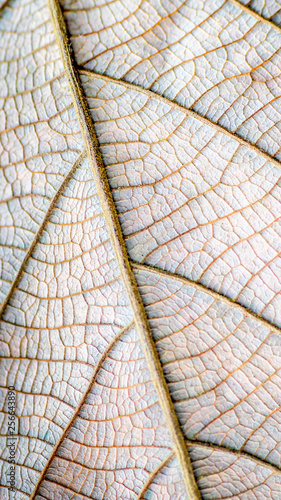 detail closeup structure of brown dry leaf. natural abstract texture background