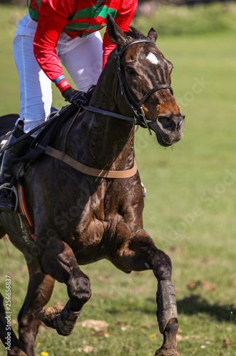 galloping Race horse and jockey close up