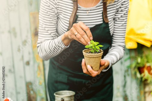 Holding a plant in jiffy pot