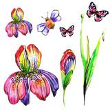 beautiful pink flowers ,bee, iris,on a white, hand drawn