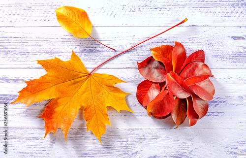 circle of mountain ash leaf maple © elf911dir@mail.ru