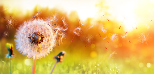 Dandelion In Field At Sunset - Freedom to Wish © Romolo Tavani