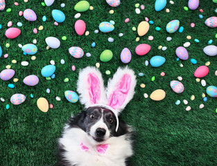 Dog with bunny ears surrounded by Easter eggs and candy