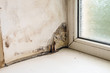 canvas print picture - Wetting and growth of molds of window slope near plastic window and windowsill. Collapsing drywall.