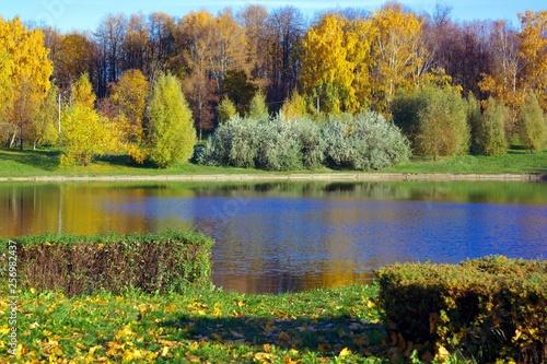 Birch Alley at Autumn - 256982437