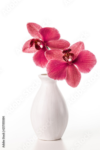 Image with orchid. - 257015084