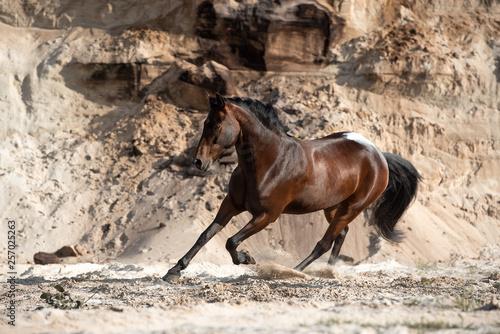 Pferd galoppiert in der Sandkuhle © Talitha