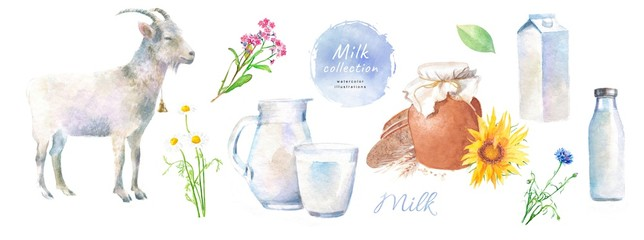 Watercolor illustrations of goat milk and dairy, village products: goat, milk, jug, bottle, pet, glass, chamomile, cornflower, wild flowers © ArdeaA