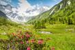 Leinwandbild Motiv Frühling im Hochgebirge von Tirol