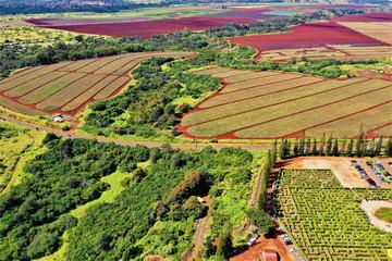 Dole Plantation Oahu - Luftbilder mit Drohne von der Dole Ananas Plantage