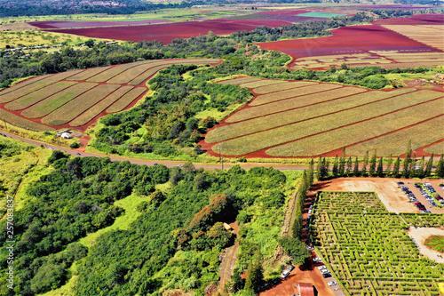 Dole Plantation Oahu - Luftbilder mit Drohne von der Dole Ananas Plantage © Roman