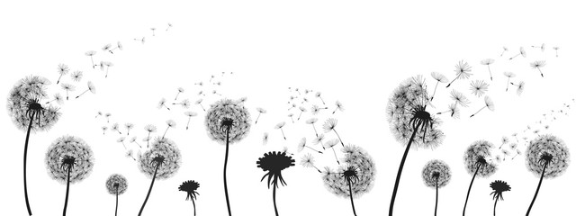 Abstract black dandelion, dandelion with flying seeds illustration - for stock