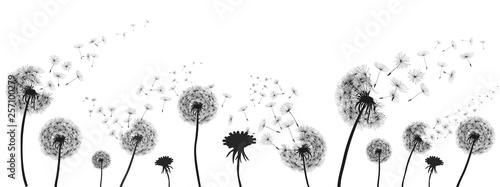Abstract black dandelion, dandelion with flying seeds illustration - for stock