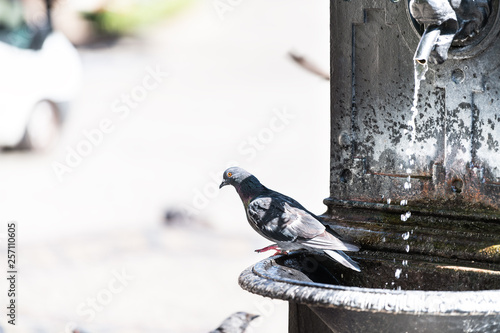 Warsaw, Poland historic sunny summer day morning street water fountain with pigeon bird and stream