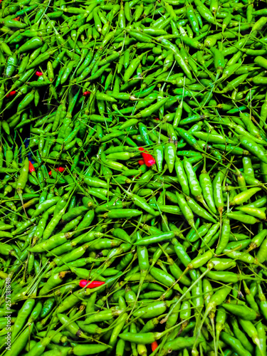 fresh green and red chili in the outdoor gardens - 257181848