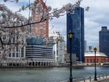 Fototapeta Nowy York - Buildings of New York from Roosevelt Island © alexat25