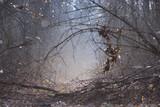 Fototapeta Fototapety na ścianę - Early spring in a forest: trees in a misty sunshine © Yurii Zushchyk