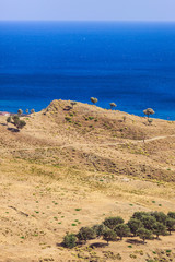 Typical minimalistic dry deserted view of Calabria with olive trees © nata_rass