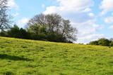 Fototapeta Nature - Drzewa, zielony krajobraz, Landscapes green © Malgorzata