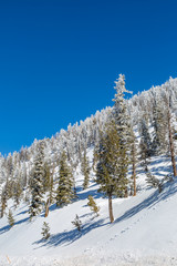 Snow covered trees on a Utah hillside, with a blue sky overhead © lemanieh