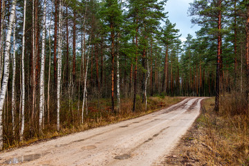 empty gravel road in autumn