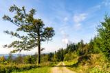 Beautyful lane in Blackforest