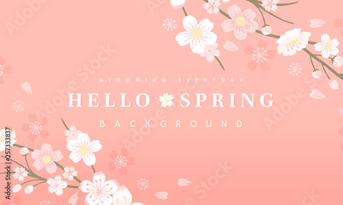 Cherry blossom background illustration - 257333837
