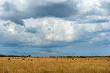 Fototapeta Sawanna - Savannah landscape in the National park of Kenya © byrdyak