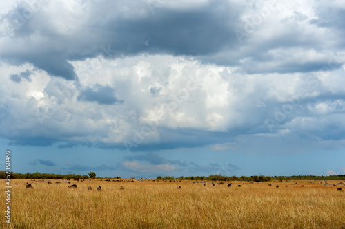 Savannah landscape in the National park of Kenya © byrdyak