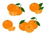 Mandarines, tangerine, clementine with leaves isolated on white background. Citrus fruit. Raster Illustration set