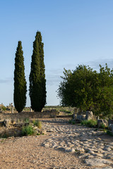 Two Trees at the Roman Ruins of Volubilis in Morocco © James