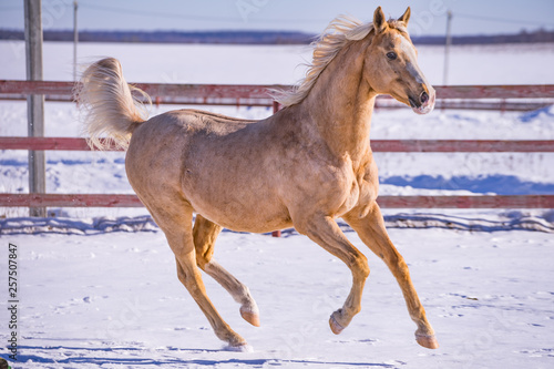 Horse galloping © smile262