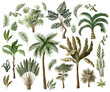 Tropical tree elements such as palm, banana, monstera and other isolated. Vector.