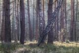 Fototapeta Forest - Las © Kamil