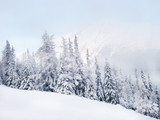 Winter mountain landscape and spruce covered with snow on mountain peaks. Slovakia.