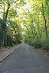 The curves of the path on petřín hill, Prague, Czech Republic © Inna Polekhina