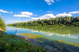 Shoreline of Danube river overgrown of trees on the banks at summer. Landscape.