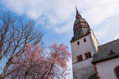 canvas print picture Die Kirche in Nierstein und ein blühender Mandelbaum