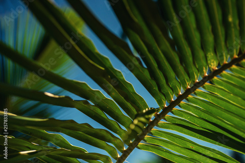 a mysterious atmosphere with palms in the jungle, exotic trees in maldives